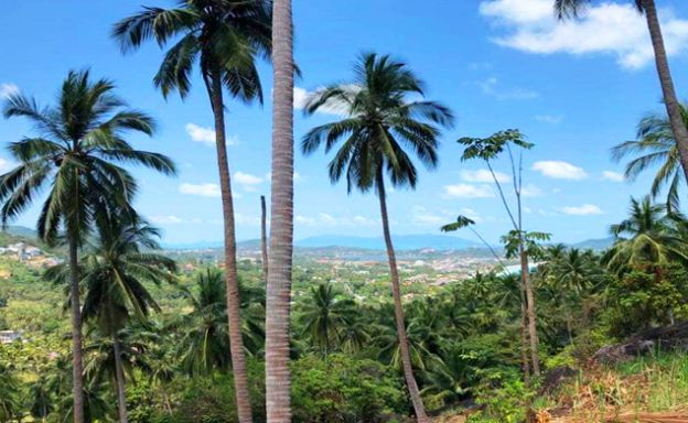 Pristine Sea view Land for Sale on Chaweng Noi Hillside
