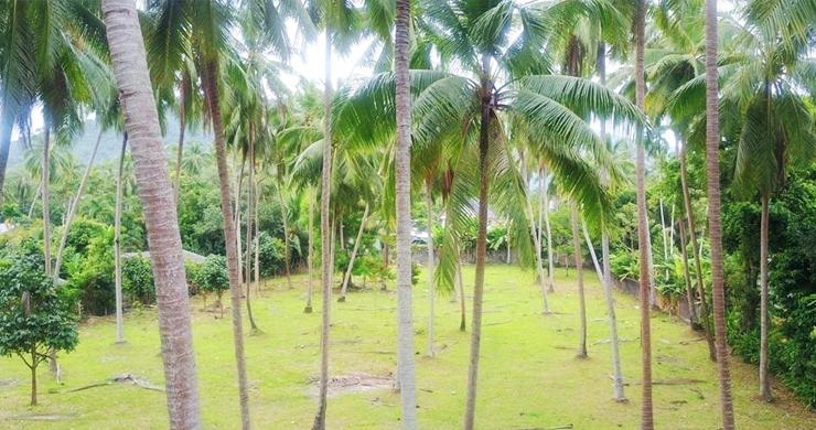 Charming Flat Coconut Land Plot for Sale in Lipa Noi-3