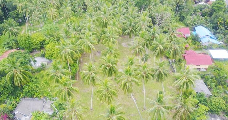 Charming Flat Coconut Land Plot for Sale in Lipa Noi-4