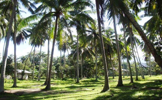 Charming Flat Coconut Land Plot for Sale in Lipa Noi