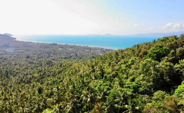 Bargain Sea view Land for Sale in Koh Phangan