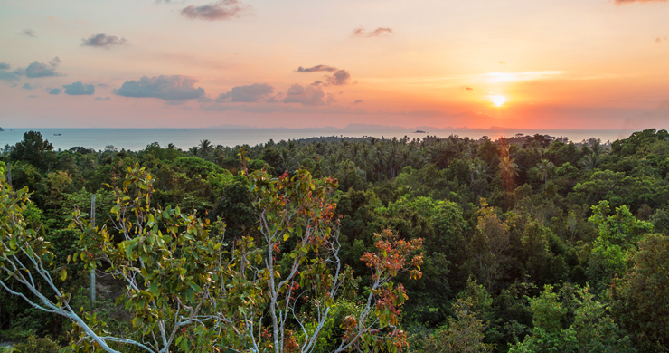 Affordable Sea-view Land Plots for Sale in Koh Phangan-1