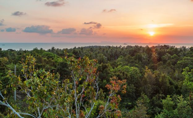 Affordable Sea-view Land Plots for Sale in Koh Phangan