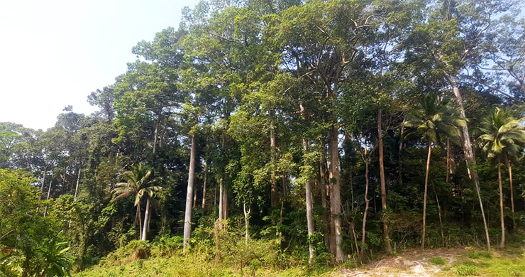 Affordable Flat Land for Sale in Peaceful Part of Lamai-7