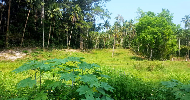 Affordable Flat Land for Sale in Peaceful Part of Lamai-2