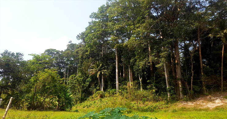 Affordable Flat Land for Sale in Peaceful Part of Lamai-4