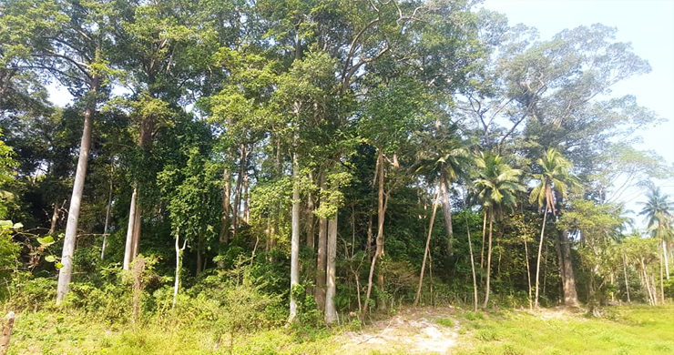 Affordable Flat Land for Sale in Peaceful Part of Lamai-5