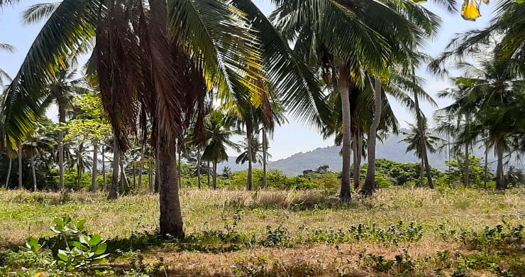 Koh Samui Beachfront Land for Sale in Lipa Noi-9