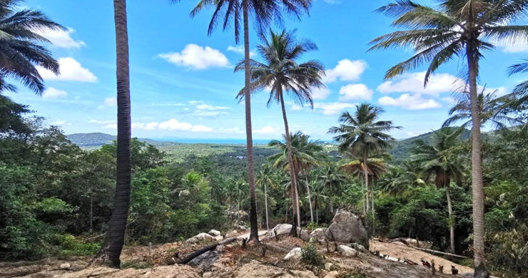 Hot Price Sea-view Land for Sale in Hin Kong-1