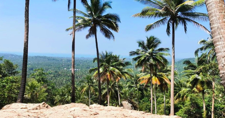 Hot Price Sea-view Land for Sale in Hin Kong-4