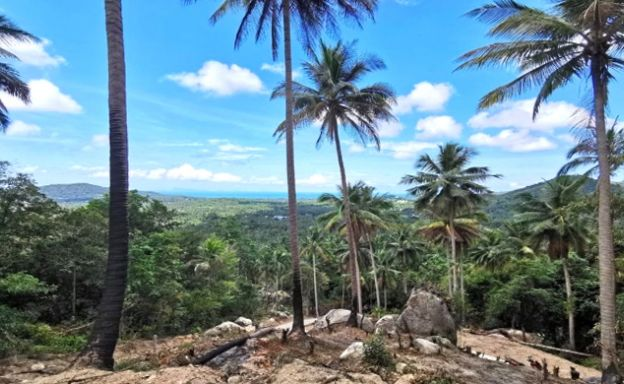 Hot Price Sea-view Land for Sale in Hin Kong