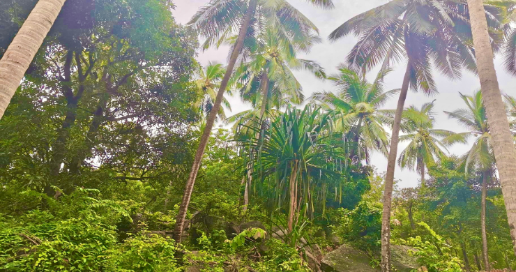koh-phangan-sea-view-land-for-sale-ban-tai-4