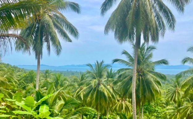 koh-phangan-sea-view-land-for-sale-ban-tai