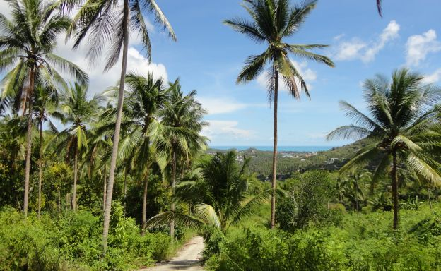 Hot Price Sea View Land Plots For Sale in Bophut