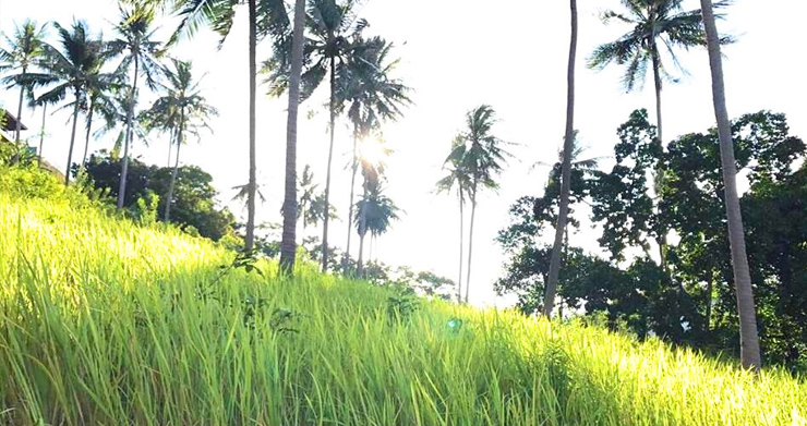 Prime Sea view Land Plots For Sale in Bophut Hills-6
